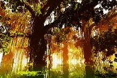 Mysterious Fairy Tale Fantasy Deep Jungle in Water in the Sunset Sunrise