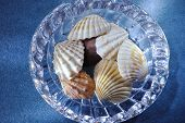 shells in glass bowl on blue background