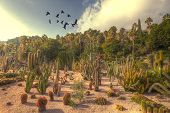 pic of ocotillo  - flock of crows flying - JPG