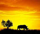 Rhino in the field,