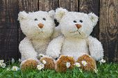 Couple of teddy bears sitting in the green embraced. Funny decoration for a wedding.