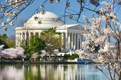 Thomas Jefferson Memorial during Cherry Blossom Festival in spring - Washington DC, United States