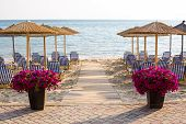 picture of flower pot  - Evening Sandy Beach view with two big flower pots of Colorful vibrant purple flowers near the wooden path to the sea among the authentic umbrellas in Siviri Greece coast - JPG