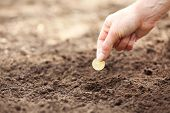 image of rich soil  - Female hand planting coin into soil - JPG