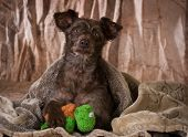 picture of toy dogs  - dog under a blanket with paw on stuffed toy  - JPG