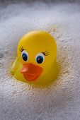 foto of suds  - Yellow rubber duck floating in soap suds - JPG