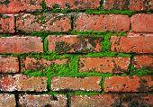 moss on brick wall