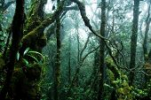 stock photo of gunung  - tropical rainforest - JPG