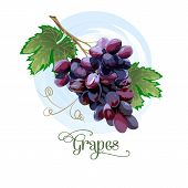 Fresh Bunch Of Grapes Purple Icon On White Background. Vector Illustration In Flat Style poster