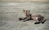 Tabby Cat Lying Down And Sleeping On The Floor, Selective Focus. poster