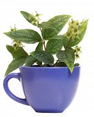 Color photo of a cup of jasmine and branches
