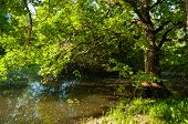 Summer Forest Landscape - Green Deciduous Forest Oak Tree On The Bank Of The Small Forest River In S poster