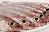 Fresh Fishes In White Dish