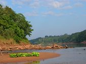 Amazon Jungle Scene