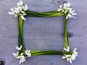 Snowdrop Flowers Frame On Wooden Texture Background. Tender White Snowdrop Flowers Frame On Wooden T poster