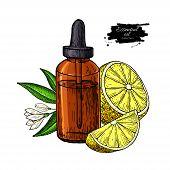 Lemon Essential Oil Bottle And Lemon Fruit Hand Drawn Vector Illustration. Isolated Drawing For Arom poster