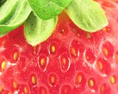 Macro Of A Strawberry