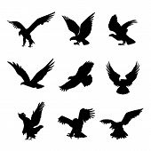 Eagle Falcon Bird Hawk Animal Silhouette Black Icon Flat Design Element Vector Illustration poster
