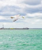 Blue Clouded Sky, Clear Sea Water, Panoramic Skyline, Sea-gulls, Coast View From A Sea. poster