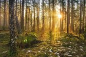 Landscape Of Spring Forest In Backlight. Morning Rays Of Sun In Frame At Dawn In Picturesque Forest. poster