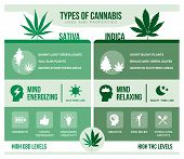 Cannabis Sativa And Cannabis Indica: Differencies And Health Benefits Infographic poster