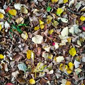 Dry Sinking Leaves Lie On The Ground Among Them Several Green And Yellow Leaves. poster