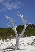Dead Tree On Beach