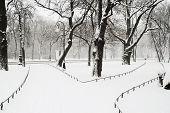 Alexandriyski Park At Snowfall
