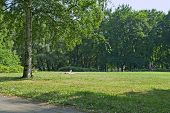 City Park In Summer And Girl