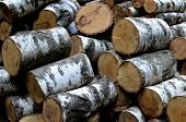 Pile Of Birch  Tree Logs - Lumbering, Wood Sledge, Fire Wood poster