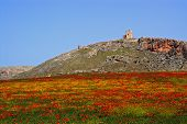 View Of Star Castle On The Hilltop With A Poppy Field In The Foreground, Teba, Malaga Province, Anda poster