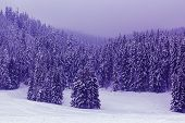 Purple Surreal Fir Trees Covered With Snow In The Fog poster