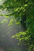 Hornbeam Branches In Direct Light Of Sunrise