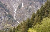 immergrüne überdachte Piste mit schneebedeckten Berg