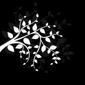Branch on black background