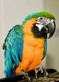 Parrot  Sitting On Cage.