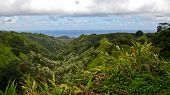 View from the Hana Highway