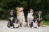 Happy Family Dog Border Collie