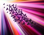 Multicolour Background With Butterflies, Like Abstract Sunshine