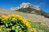 mount Rozsutec with marigold - Mala Fatra mountains - Slovakia