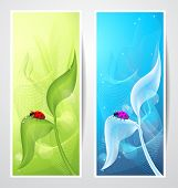 Creative banners with ladybird on leaf
