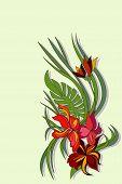 Vector Beauty Flower