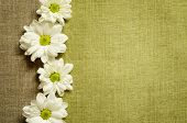 Daisies On Canvas Background