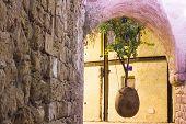 Old Jaffa The Hanging Tree