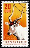 Postage Stamp Gdr 1970 White Antelope, Addax