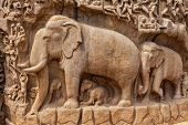Elephants on descent of the Ganges and Arjuna's Penance ancient stone sculpture - monument at Mahabalipuram, Tamil Nadu, India