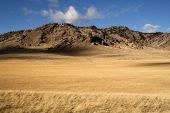 Yellow Grain Grassland Growing Scenic Valley Northern Rocky Mountain Landscape