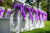White Wedding Chairs With Purple Bows Outdoors