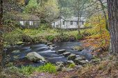 stepping stones in an autumn woodland scene