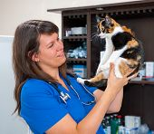 Young woman vet examining cat in the clinic